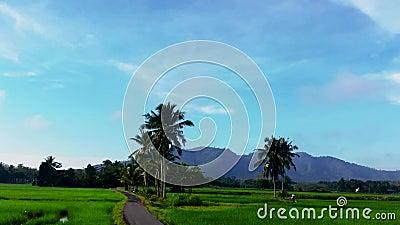 Beau timelaphe de rizières à Kedah Malaysia banque de vidéos