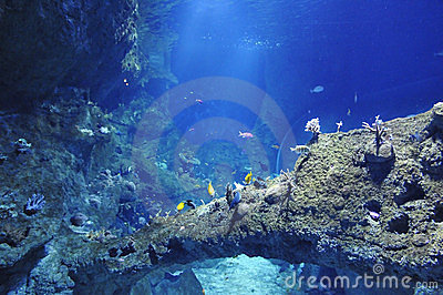 Beaucoup de poissons de mer dans un grand aquarium photo libre de droits image 23464035 - Grand poisson de mer ...