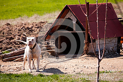 how to build a doghouse for a pitbull