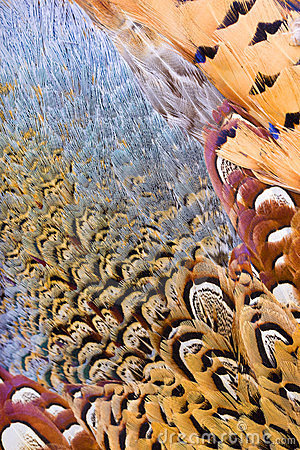 Beautiful abstract background  feathers