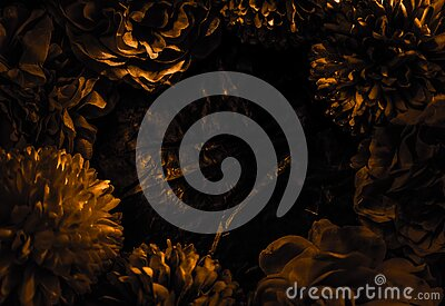 Beautiful abstract color black and yellow flowers graphic on black background and gold flower frame and brown leaves texture, dark Stock Photo