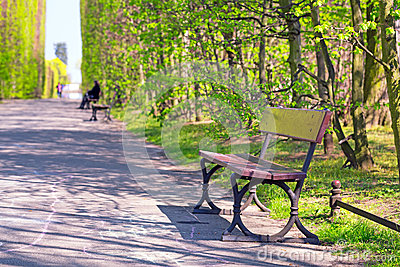 Beautiful alley with empty bench in the park
