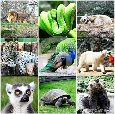 Beautiful Animals Collage Royalty Free Stock Photography