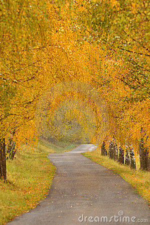 Beautiful autumn alley and road