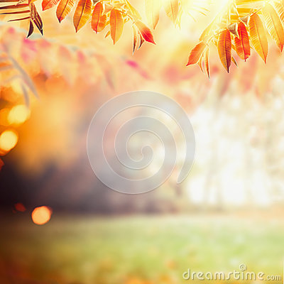 Free Beautiful Autumn Background With Colorful Fall Foliage At Sunbeam Background. Fall Outdoor Nature Stock Image - 97010681