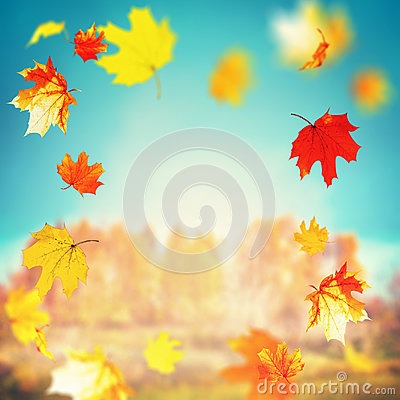 Free Beautiful Autumn Falling Leaves On Sunny Day At Trees And Grass Landscape And Sky Background, Outdoor Fall Nature Stock Photo - 97450020