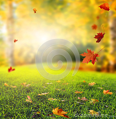 Free Beautiful Autumn Landscape With Yellow Trees,green Grass And Sun Royalty Free Stock Image - 76138106