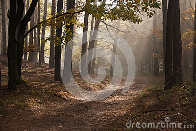 Beautiful autumn lane in the forest. Autumn landscape. Composition of nature.