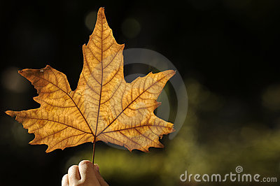 Beautiful autumn leaf