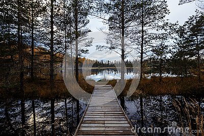 Beautiful autumn leaves trees with fine art look. colorful soft vintage forest park. autumn landscape background. A Stock Photo