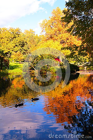 Free Beautiful Autumn Pond With Ducks And Trees Reflected In Water Stock Image - 82472541