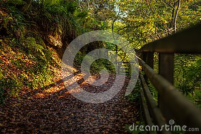 Beautiful autumn with vibrant colors in forest park, blurred handrail and footpath leading in to the distance Stock Photo