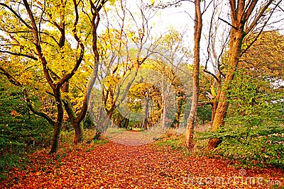Beautiful autumnal road in the park