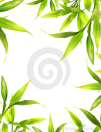 Beautiful bamboo leaves