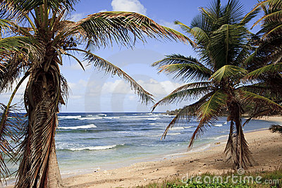 Beautiful Barbados Beach