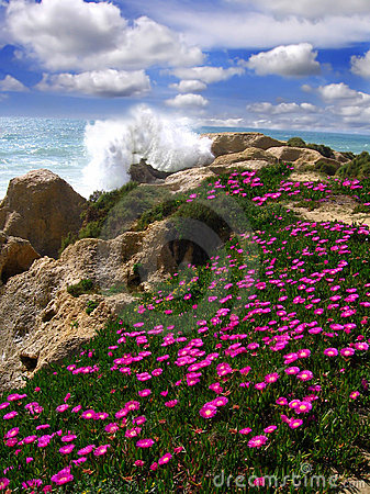 Beautiful beach with flowers, Algarve, Portugal