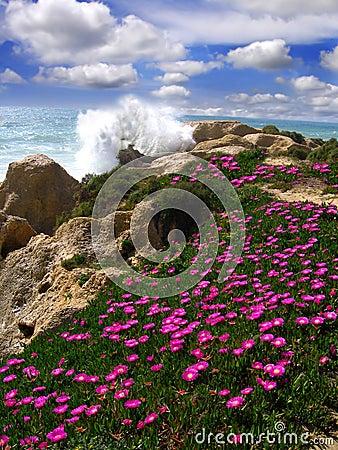 Beautiful beach with flowers, Algarve, Portugal