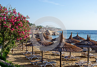 Beautiful beach, flowers sunbed umbrellas on sea background