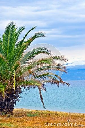 Beautiful beach sunrise landscape with palm tree