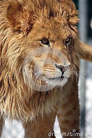Beautiful Beast