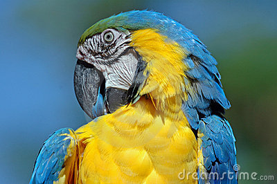 Beautiful bird.