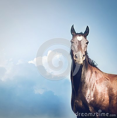 Free Beautiful Black Horse With White Heart On Forehead At Sky Stock Photos - 101003283