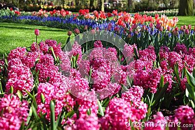 Beautiful blooming spring garden