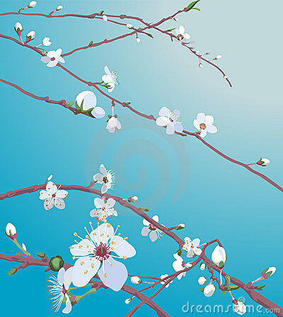 Free Beautiful Blossom Flowers Royalty Free Stock Photos - 1997738