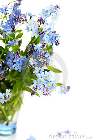 Free Beautiful Blue Flowers Forget-me-nots Stock Image - 14570711