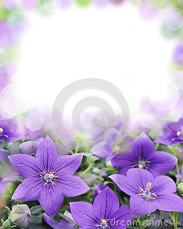 Free Beautiful Bluebells On Blurred Background Royalty Free Stock Photo - 27473475