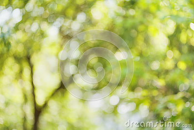 Beautiful bokeh background of defocused tree. Natural blurred backdrop of green leaves. Summer or spring season. Stock Photo