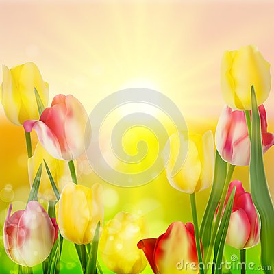 Free Beautiful Bouquet Of Tulips. EPS 10 Royalty Free Stock Photos - 39289988