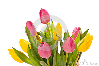 Beautiful bouquet of tulips