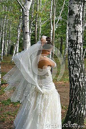 Bride in birch grove