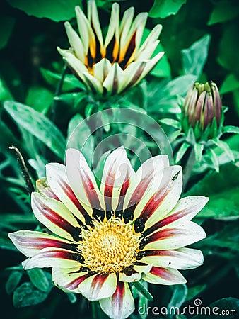 Free Beautiful Bright Yellow Sunflower With Red Veins Stock Photo - 56847790
