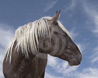 Beautiful brown black horse with blonde mane