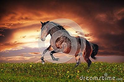 Beautiful brown horse running gallop