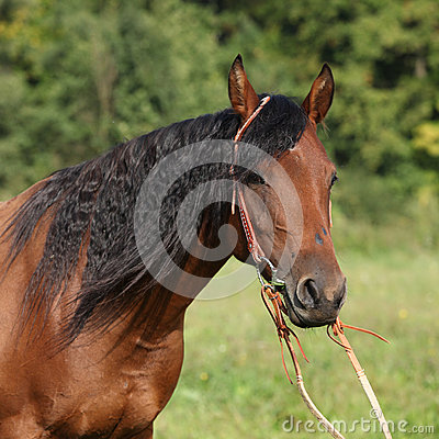 Beautiful brown mare with long black mane