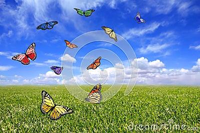 Beautiful Butterflies Flying Free in an Open Field