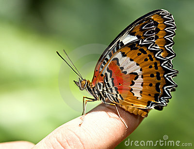 Beautiful butterfly on child finger.