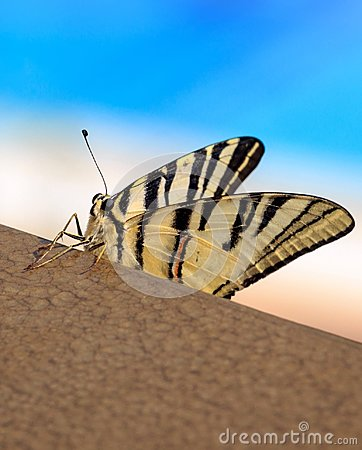 Free Beautiful Butterfly For Wallpaper Stock Photography - 104673472
