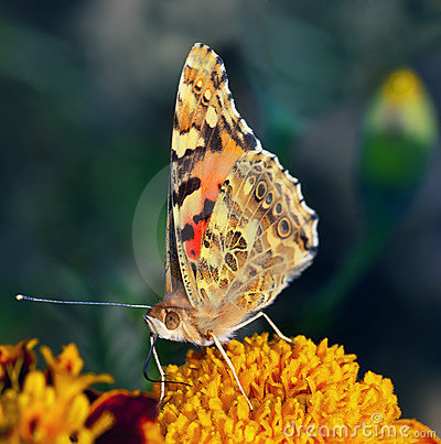 Beautiful butterfly rests on flower