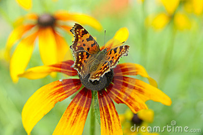 Beautiful butterfly on a summer flower