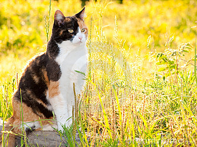 Beautiful calico cat in high grass