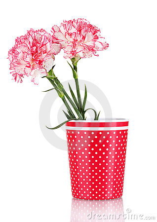 Free Beautiful Carnations In Red Cup Royalty Free Stock Photos - 23154538