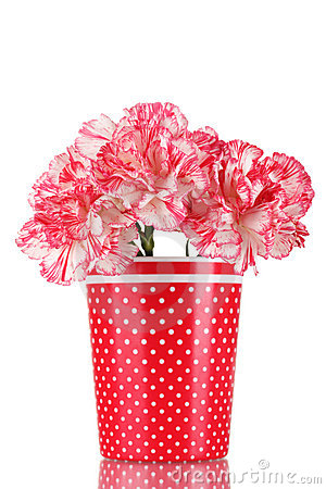 Free Beautiful Carnations In Red Cup Stock Photo - 23154670