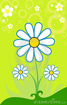 Beautiful  chamomile. Background for a Greeting po