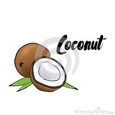 Free Beautiful Coconut. Vector Illustration. Tropical Fruits. Royalty Free Stock Photos - 88284768