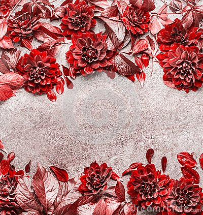 Free Beautiful Creative Red Autumn Flowers And Leaves Frame Composing On Gray Stone Background. Floral Fall Pattern , Flat Lay Royalty Free Stock Photo - 101002795
