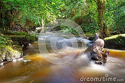 Beautiful creek of Clare Glens